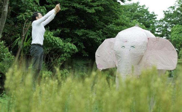 【急報】ピンクの象(二代目)の受け入れ先が決定
